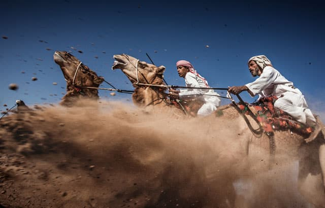 ( Camel Ardah) As it called in Oman, its one of the traditional styles of camel racing between two camels controlled by expert men, the faster camel is the loser one, so they must be running by the same speed level in the same track