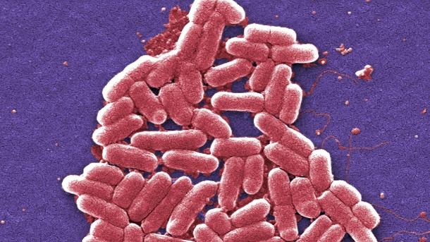 gefaehrliche-resistente-bakterien-verbreiten-sich-immer-mehr-