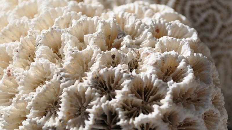 coral-1169661_960_720_1024