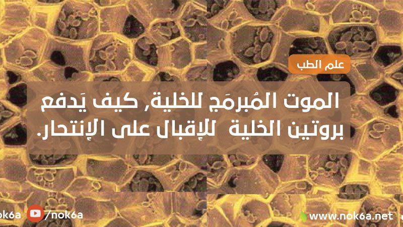 الموت-المبرمج-للخلية