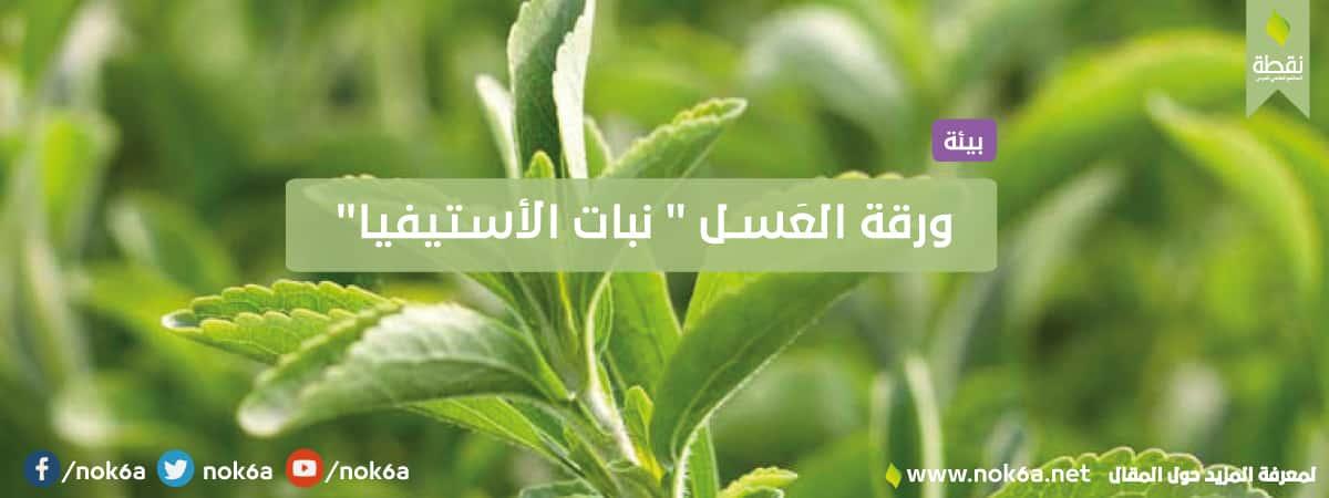 نبات-الأستيفيا