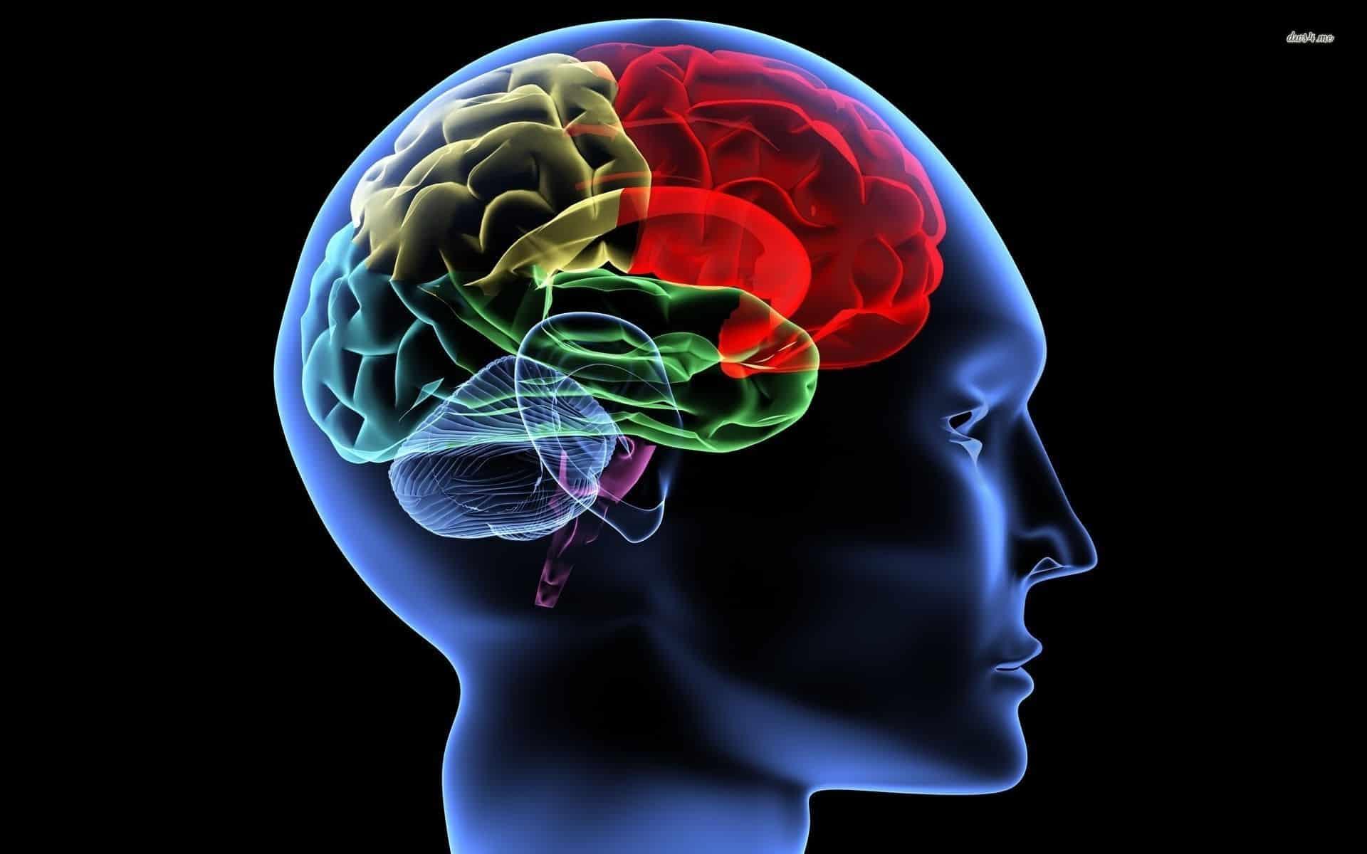 الخلايا العصبية